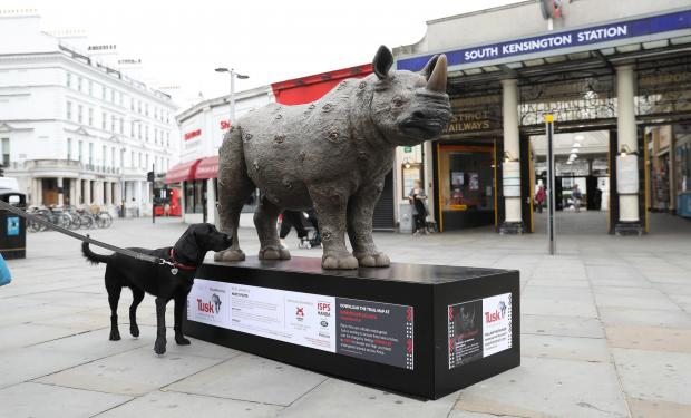 Brentwood Live: Undated Handout Photo of a rhino sculpture designed by Nancy Fouts. See PA Feature TOPICAL Travel Rhino Trail. Picture credit should read: PA Photo/Tim Whitby/Getty. WARNING: This picture must only be used to accompany PA Feature TOPICAL Travel Rhino Trai
