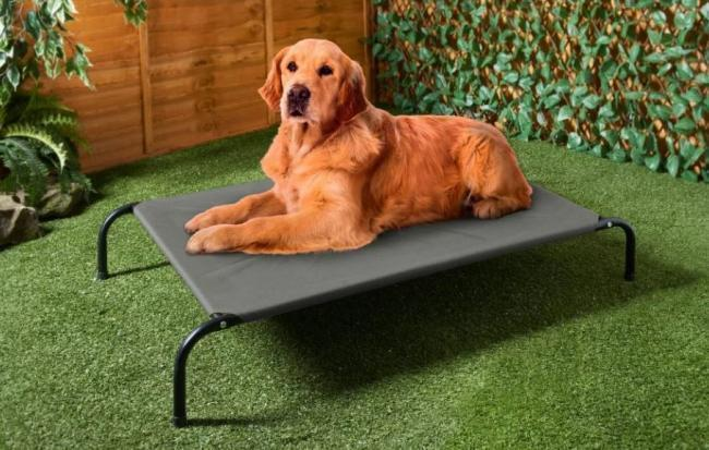 Summer is here and B&M are selling loungers and sunscreen for dogs